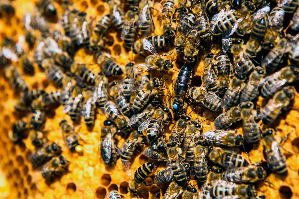 To be[e] – Bienen und Mensch SEIN| Salon21
